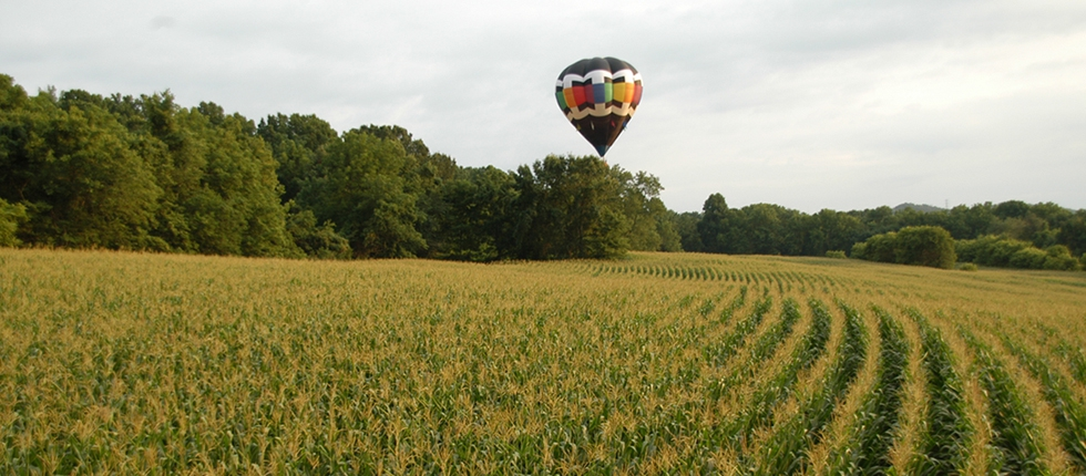 Balloons Flying Over The Fields of New Jersey
